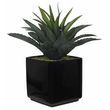 Artificial Green Star Succulent Desk Top Plant in Pot