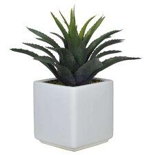 Artificial Green Star Succulent Desk Top Plant in Pot