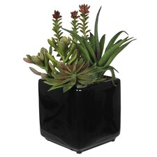 Artificial Succulent Garden in Cube Ceramic