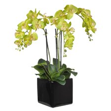 Artificial Triple-Stem Phalaenopsis Orchid Arrangement in Cube Ceramic Vase