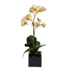 Artificial Mini Phalaenopsis Orchid in Cube Ceramic Vase