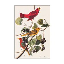 "<strong>iCanvasArt</strong> ""Summer Tanager"" Canvas Wall Art by John James Audubon"