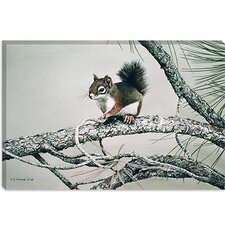 "<strong>iCanvasArt</strong> ""Red Squirrel"" Canvas Wall Art by Ron Parker"