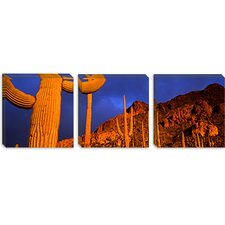 <strong>iCanvasArt</strong> Saguaro Cactus, Tucson, Arizona Canvas Wall Art