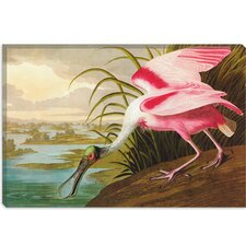 """Roseate Spoonbill"" Canvas Wall Art by John James Audubon"