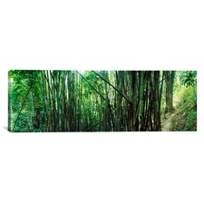 Panoramic Bamboo Forest, Chiang Mai, Thailand Photographic Print on Canvas