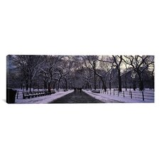 Panoramic Bare Trees in a Park, New York City Photographic Print on Canvas