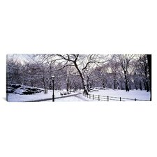 Panoramic Bare Trees Photographic Print on Canvas