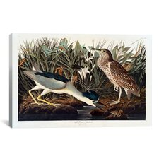 'Black-Crowned Night Heron or Qua Bird' by John James Audubon Painting Print on Canvas