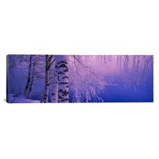 Panoramic Birch Tree at a Riverside, Vuoksi River, Imatra, Finland Photographic Print on Canvas