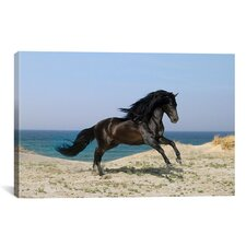 'Black Horse on the Beach' by Bob Langrish Photographic Print on Canvas