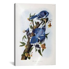 'Blue Jay' by John James Audubon Painting Print on Canvas