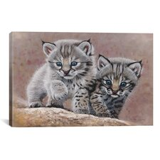 'Bobcat Babies' by Pip McFarry Graphic Art on Canvas