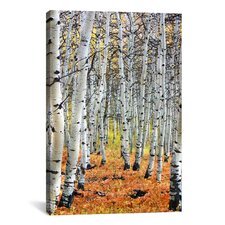 Scenic 'Autumn in Aspen' Photographic Print on Canvas