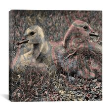 Baby Canadian Geese #2 Graphic Art on Canvas