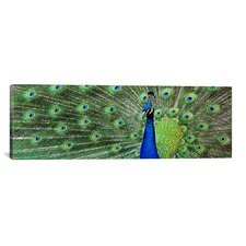 Color Bakery Aqua Peacock (Panoramic) Photographic Print on Canvas