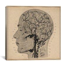 Anatomy of Human Head Canvas Wall Art