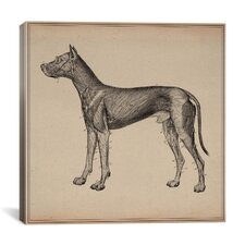 """Anatomy of Lymph Vessels in Dog"" Canvas Wall Art by Hermann Baum"