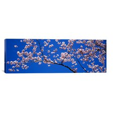 Panoramic Cherry Blossoms Washington, D.C Photographic Print on Canvas