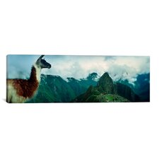 Panoramic Alpaca with Machu Picchu in the Background, Peru Photographic Print on Canvas