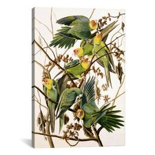 'Carolina Parakeet, From Birds of America, 1829' by John James Audubon Painting Print on Canvas
