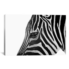'Ignoring Zebra' by Bob Larson Photographic Print on Canvas