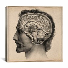 """Head Anatomical Drawing"" Canvas Wall Art by Jean-Baptiste Marc Bourgery"