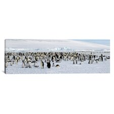 Panoramic Emperor Penguins at Snow Hill Island, Antarctica Photographic Print on Canvas