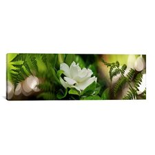 Panoramic 'Fern with Magnolia' Photographic Print on Canvas