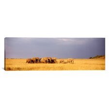 Panoramic Elephant Herd, Maasai Mara Kenya Photographic Print on Canvas