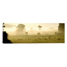 Panoramic Farmland and Sheep Southland, New Zealand Photographic Print on Canvas