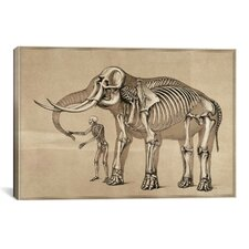 Cartography 'Comparative View of the Human and Elephant Frame' by Benjamin Waterhouse Hawkins Painting Print on Canvas