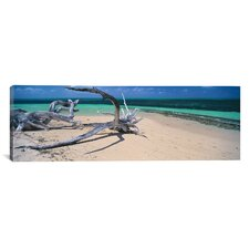 Panoramic Driftwood on the Beach, Green Island, Great Barrier Reef, Queensland, Australia Photographic Print on Canvas