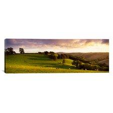 Panoramic Sheep Grazing in a Field, Bickleigh, Mid Devon, Devon, England Photographic Print on Canvas