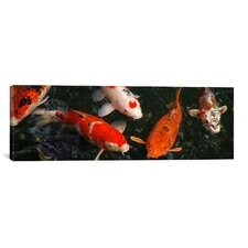 Photography 'Koi Carp in Japan' Photographic Print on Canvas