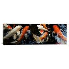 Panoramic Koi Carp Swimming Underwater Photographic Print on Canvas
