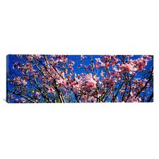 Panoramic 'Magnolias, Golden Gate Park, San Francisco, California' Photographic Print on Canvas