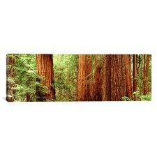 Panoramic Redwoods Muir Woods California Photographic Print on Canvas