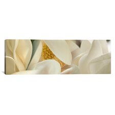 Panoramic Magnolia Heaven Flowers Photographic Print on Canvas