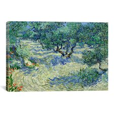 'Olive Orchard' by Vincent van Gogh Painting Print on Canvas