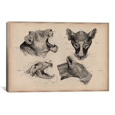Animals Art 'Lion Head Anatomy' by Wilhelm Ellenberger and Hermann Baum Painting Print on Canvas