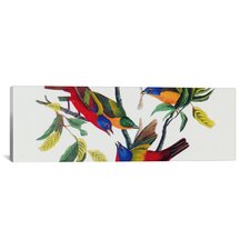 'Painted Bunting' by John James Audubon Painting Print on Canvas