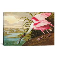 'Roseate Spoonbill' by John James Audubon Painting Print on Canvas
