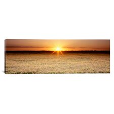 Panoramic Rice Field, Sacramento Valley, California Photographic Print on Canvas