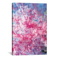 Marine and Ocean 'Precious Pink Coral' Photographic Print on Canvas
