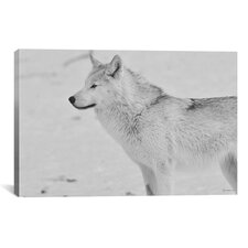 'White Wolf 2' by Gordon Semmens Photographic Print on Canvas