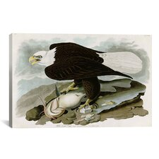 'White-Headed Eagle' by John James Audubon Painting Print on Canvas