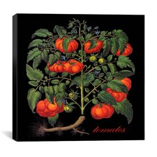 """Tomates"" Canvas Wall Art by Mindy Sommers"