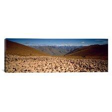 Panoramic Sheep Otago New Zealand Photographic Print on Canvas