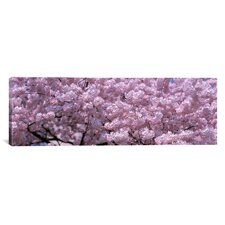 Panoramic Washington, D.C, Close-up of Cherry Blossoms Photographic Print on Canvas